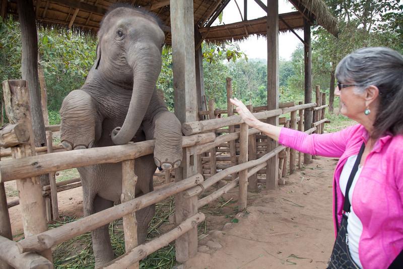 Barb the elephant whisperer