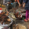 shopping for chickens at the Hoi An market