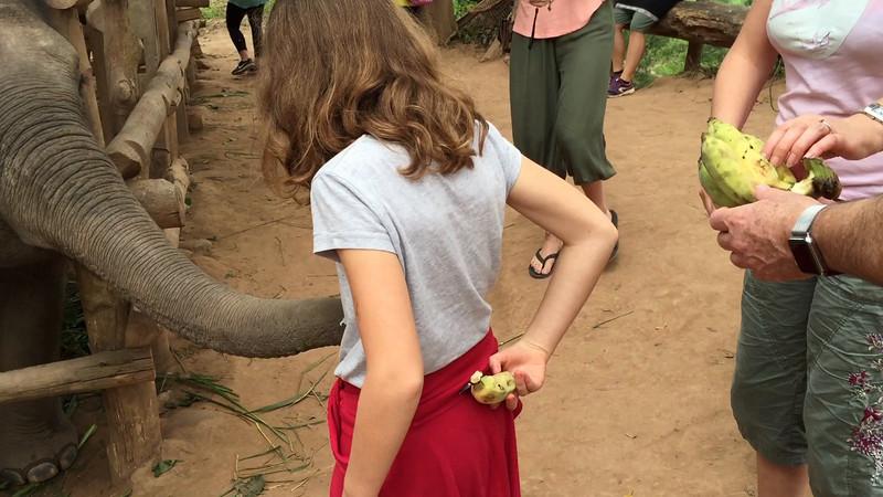 feeding the baby elephants in Laos