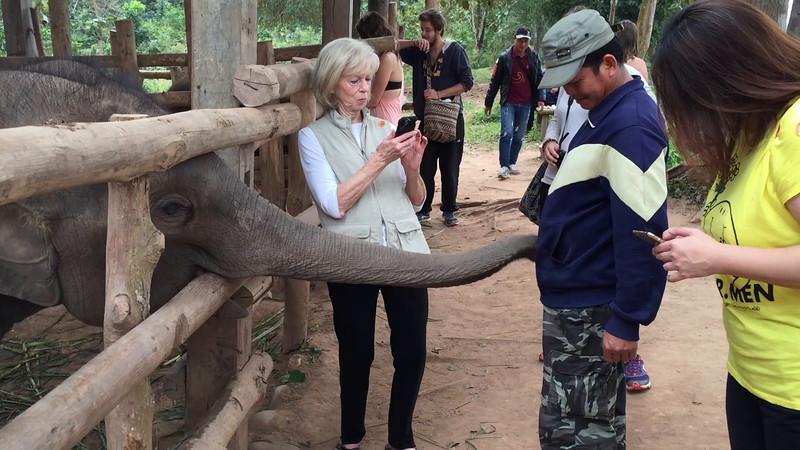 feeding the baby elephants - Laos