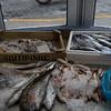 Fish shop in Agios Nikolaous