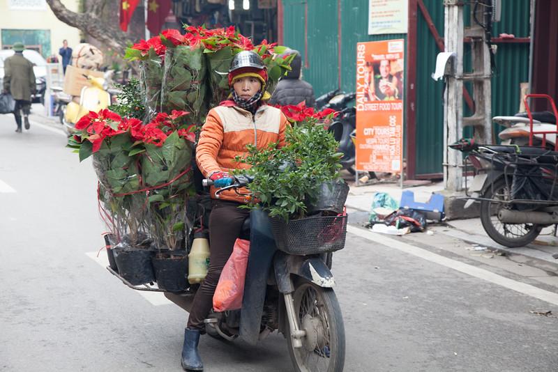 Poinsettia vendor