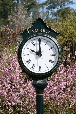 CT-PF-ClockTower-pink blooming IMG_9501