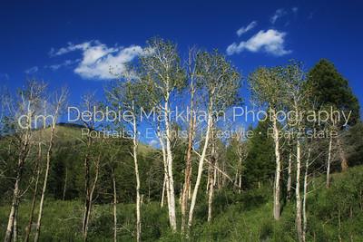 Gardiner, MT, Montana, Yellowstone National Park.