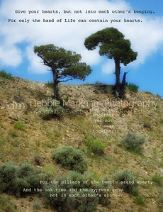 2 trees on hill near Boiling River, Yellowstone National Park, added quote from Khahil Gibran.
