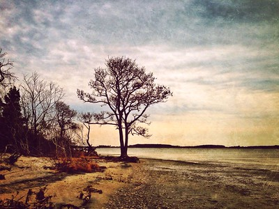 Assateague State Park Landscapes