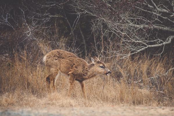 Assateague State Park Wildlife