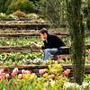March 2008 // Duke Gardens // Durham, North Carolina