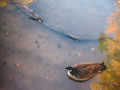 Lake Lynn Park | Raleigh, North Carolina
