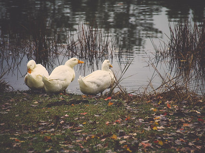 Lake Wheeler Park | Raleigh, North Carolina