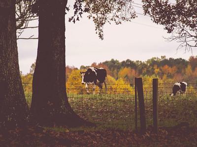 North Carolina State Agriculture