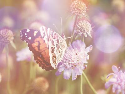 Butterflies, Dragonflies + Moths