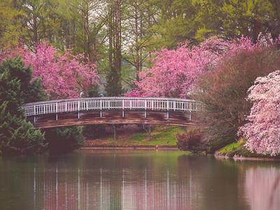 Pullen Park | Raleigh, North Carolina