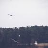 Shelley Lake Park | Raleigh, North Carolina