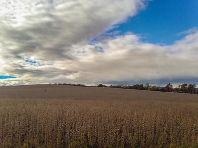 iPhone5 Photo | 2014 | Bushey School Road