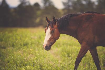 Black Hills Wild Horse Sanctuary | June 2015