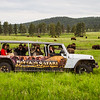 Buffalo Safari Jeep Tour | Custer State Park, South Dakota