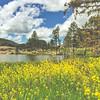 iPhone6 Plus Photo | Sylvan Lake, South Dakota