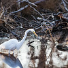 Chincoteague National Wildlife Refuge, Virginia   March 2014