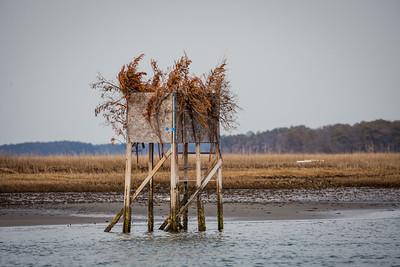 Chincoteague National Wildlife Refuge, Virginia | March 2014