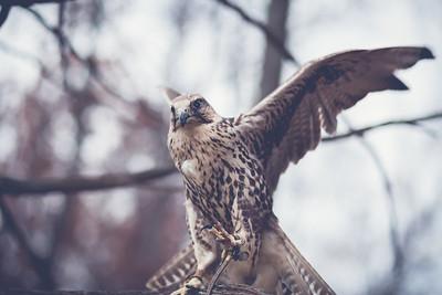 Birds of Prey Shoot \\ 2011 Nature Visions Expo \\ Manassas, Virginia
