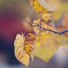 Autumn 2011 at Harris Pavilion // Old Town Manassas, Virginia