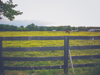 2007 // Farms + Countrysides in Middleburg, Virginia