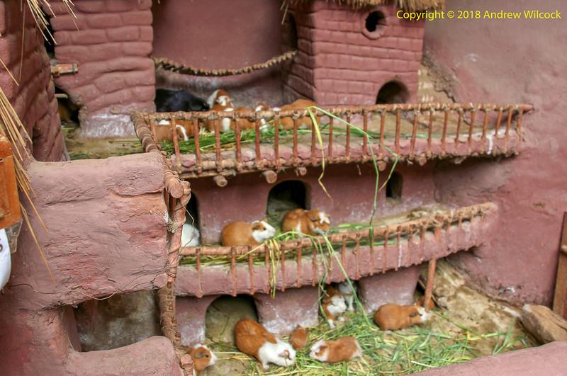 Peru, P'isac - Guinea Pigs