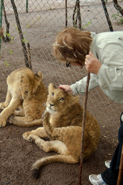 Walking with Lions-4