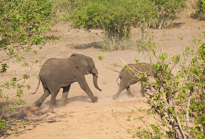 Chobe National Park. Botswana-7