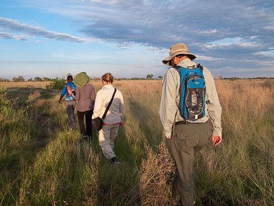 Walking in the Okavanga Delta