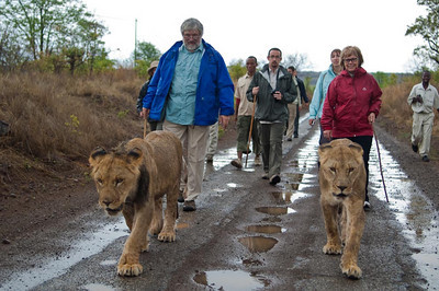 Walking with Lions-2