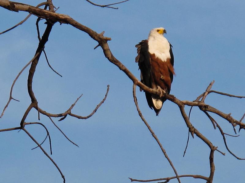 Chobe National Park. Botswana-4