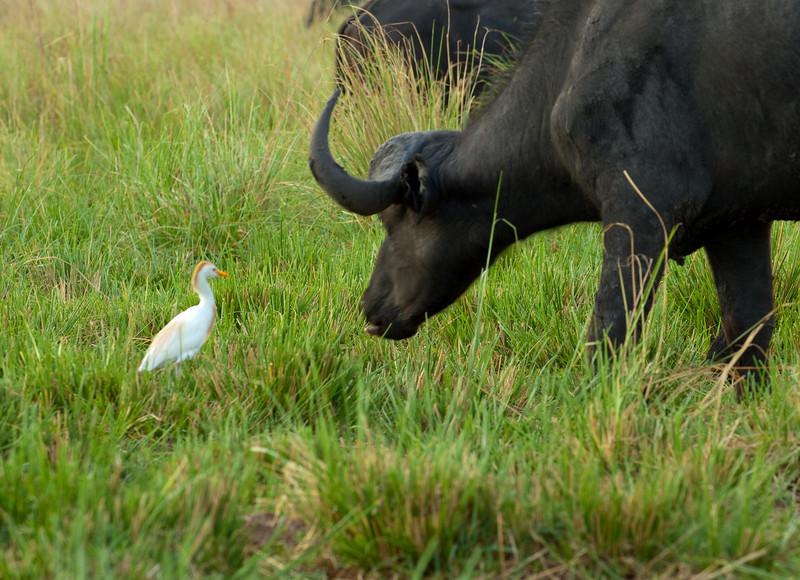 Chobe National Park. Botswana-2