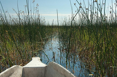 A watery trail though the grass of the Okavanga Delta
