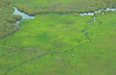 Okavanga Delta from the Air