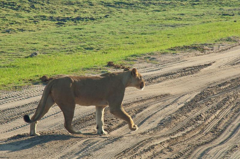 Chobe National Park. Botswana-6