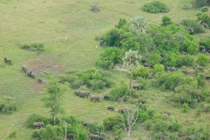 Okavanga Delta from the Air-5