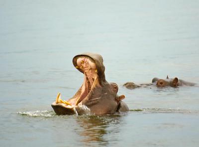 Zambezi Canoe Trip