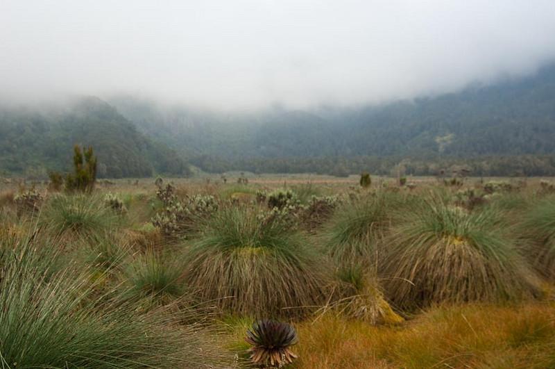 Bigo Bog Plain