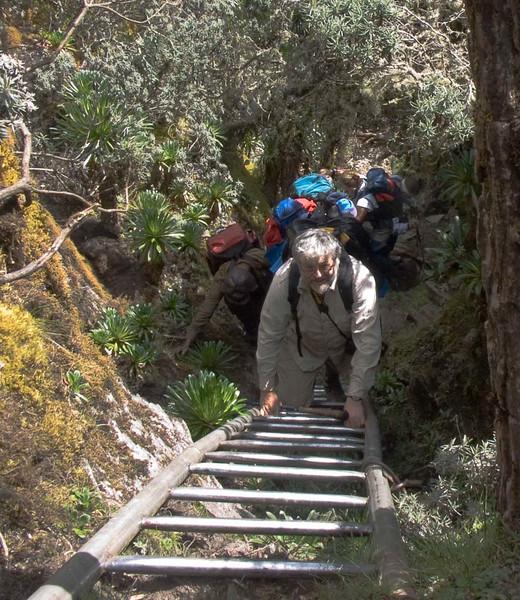 Ladder leading to Scott-Elliot Pass