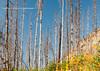 Kootenay Forest