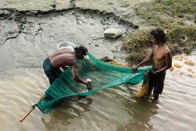 piscine harvest