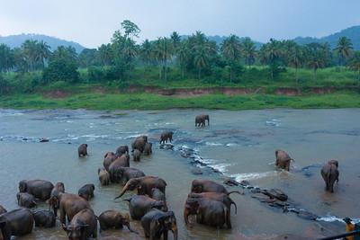 Wandering Elelphants