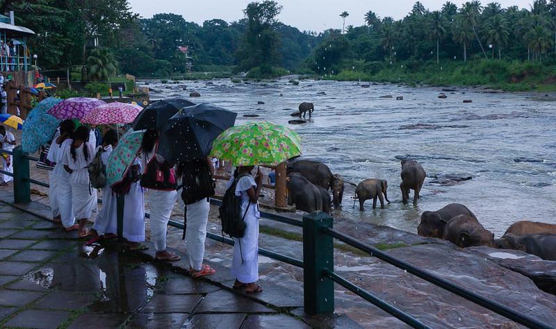 Elephants love rain
