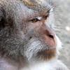 Monkey Forrest  Alas Kedaton