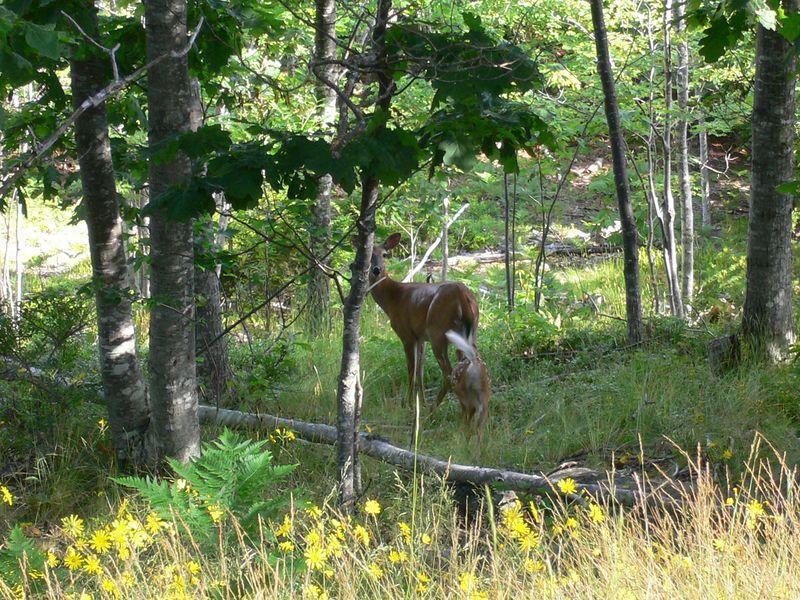 Maine Summer 2005 - 0027