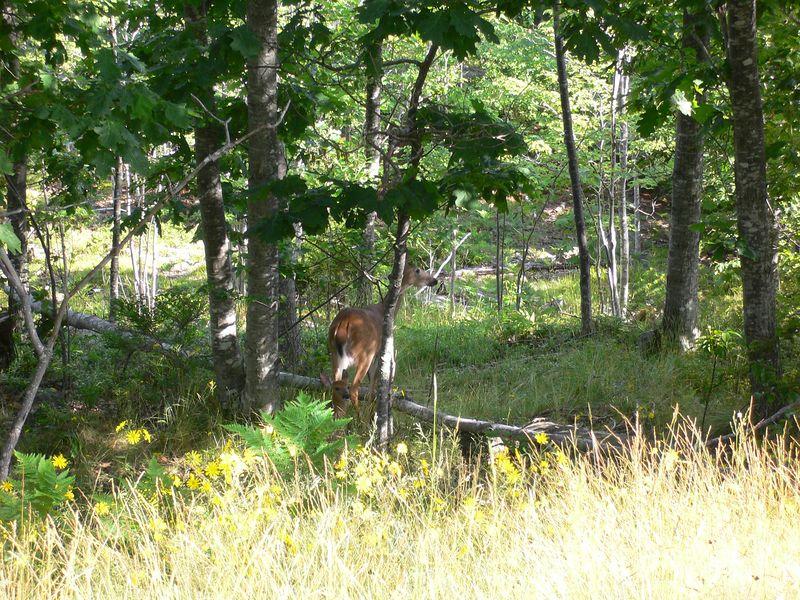 Maine Summer 2005 - 0026