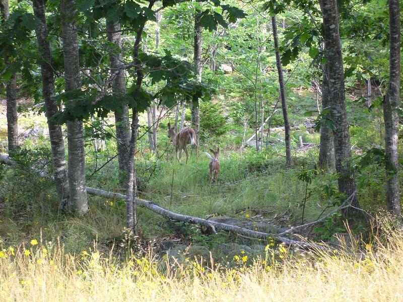 Maine Summer 2005 - 0028