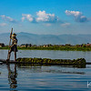 A boat carrying seaweed to be used as natural fertilizer for growing crops on the Inle Lake floating gardens.